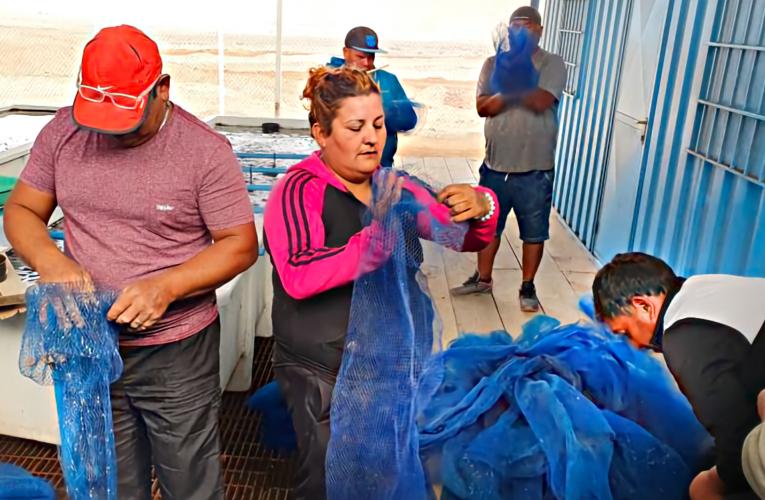 AcuyMin capacita pescadores artesanales de La Peña en el cultivo de Ostras y Ostiones.