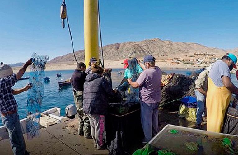 De la mano de AcuyMin, pescadores de Caleta Cifuncho inician cultivo en el mar