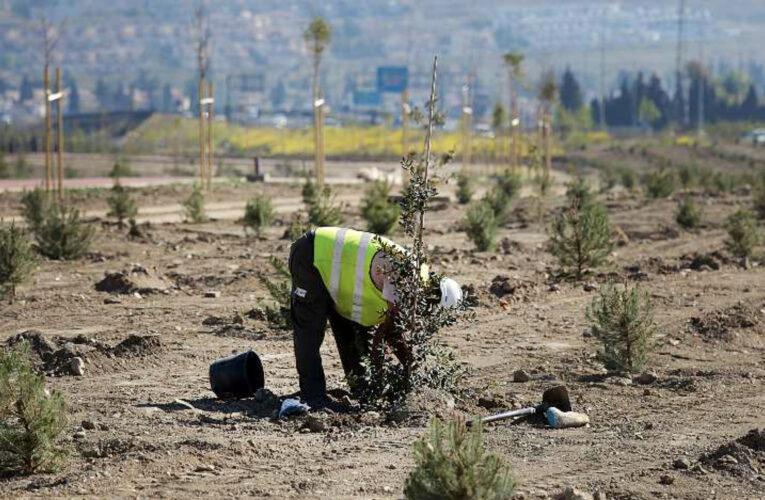 Día Mundial del Medio Ambiente: recuperar nuestros ecosistemas para 2030